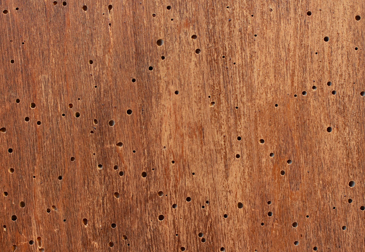 woodworm damage in furniture from woodworm infestation