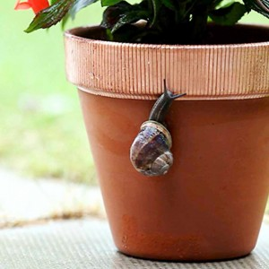 snail copper tape pest repellant ethical pest control