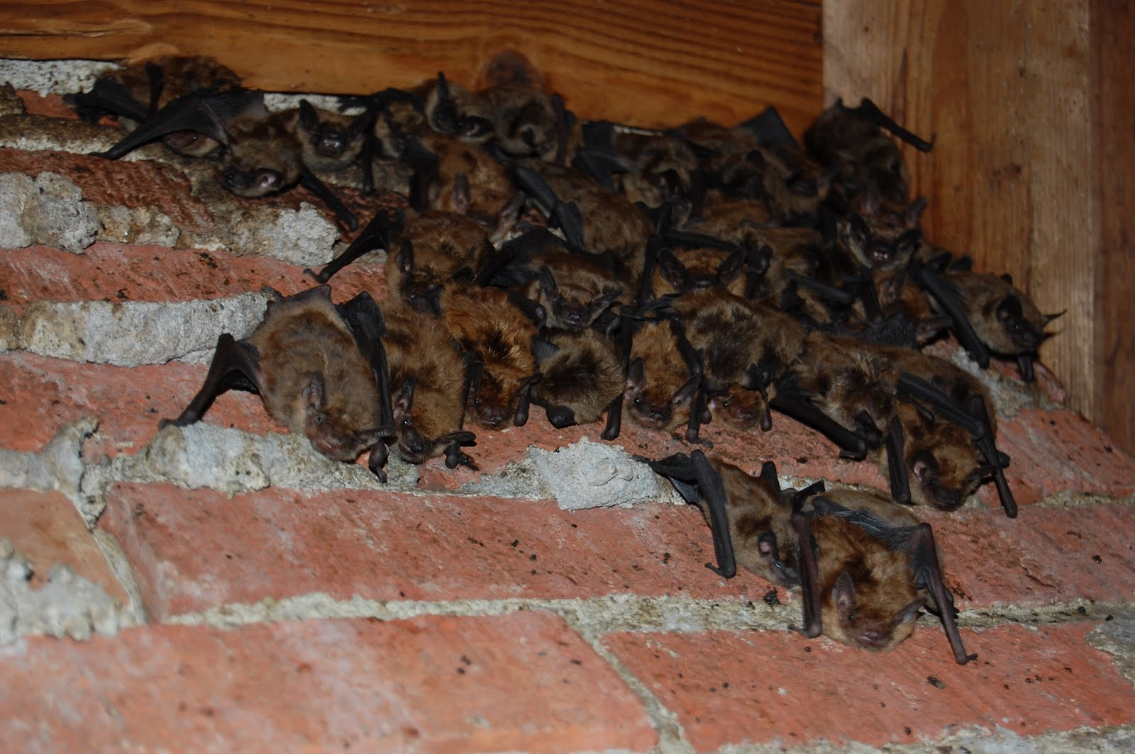 How To Get Rid Of Pests In Your Attic Rodents Insects
